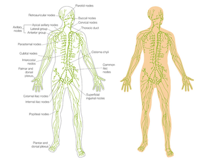 Lymphatic Drainage image