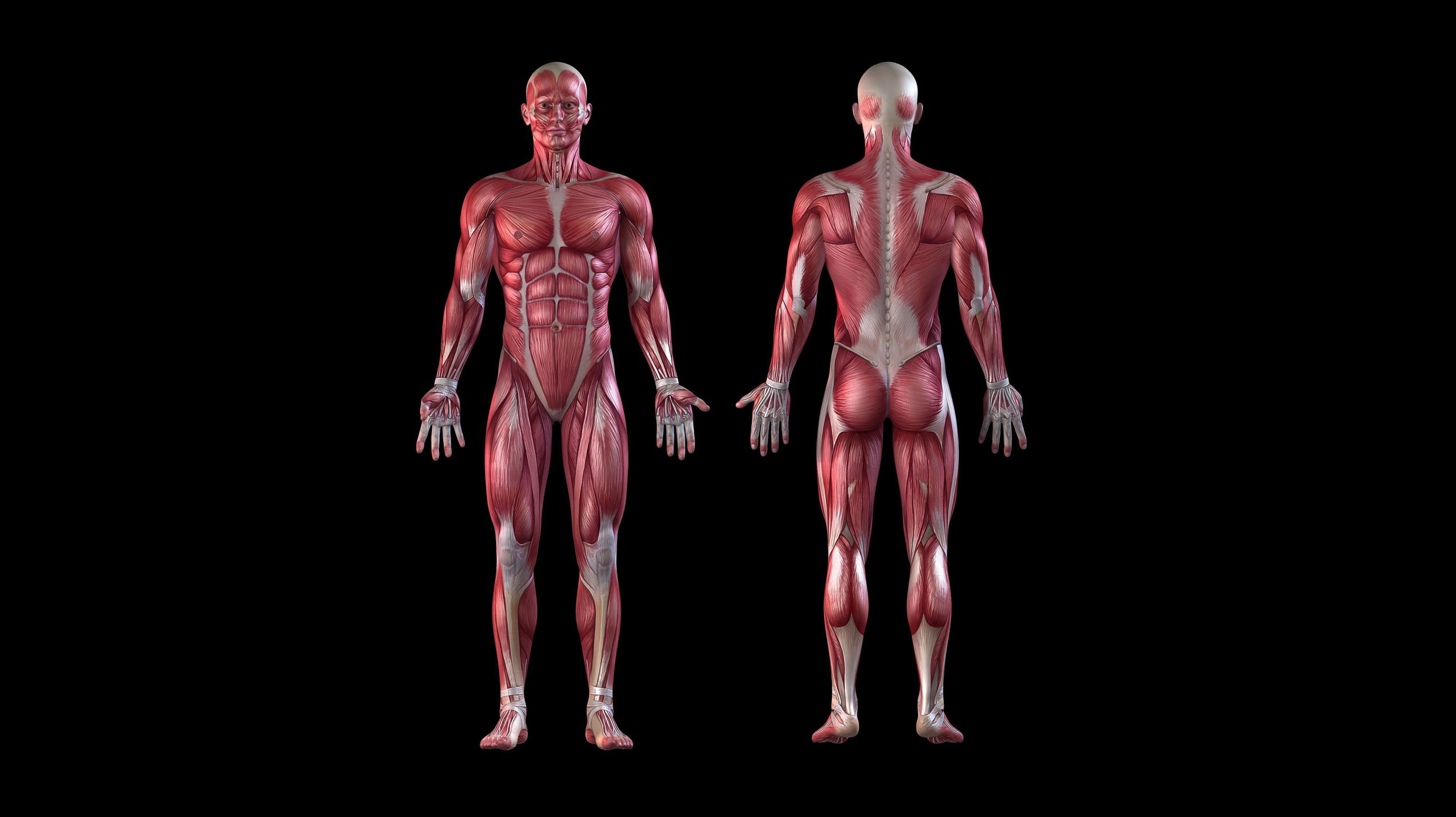 Massage muscular system